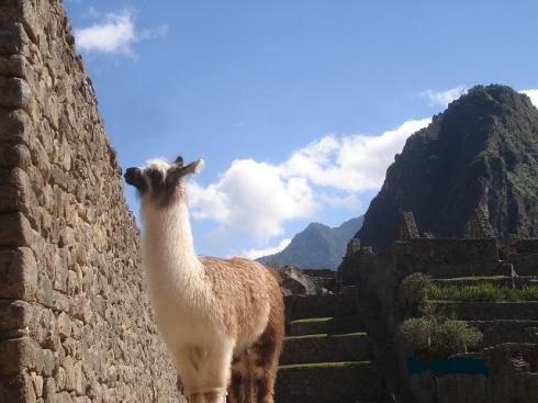 atm-llama