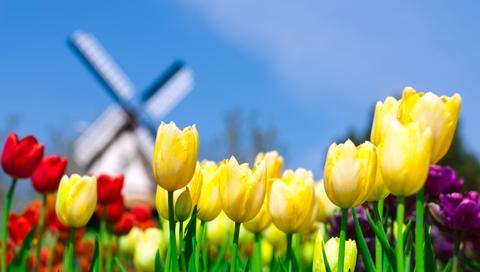 atm-tulips